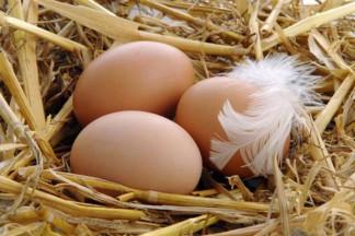 Живое яйцо